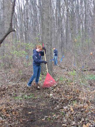 Workers cleaning up the forest.